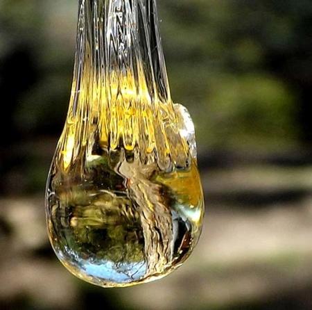 Elemi olio essenziale