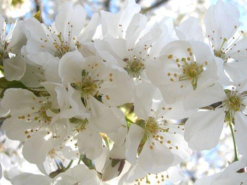 Fragranze per ambiente - Fiori Bianchi