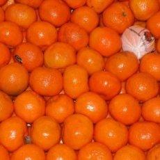 mandarino2 230x230 - Mandarino - profumi-di-frutta, profumoterapia
